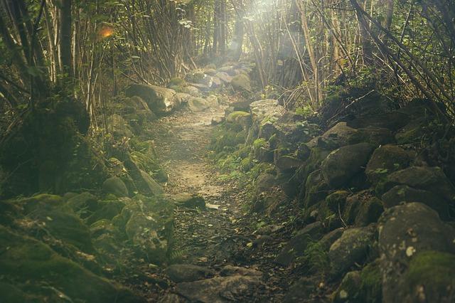 Acheter Caméra De Trail